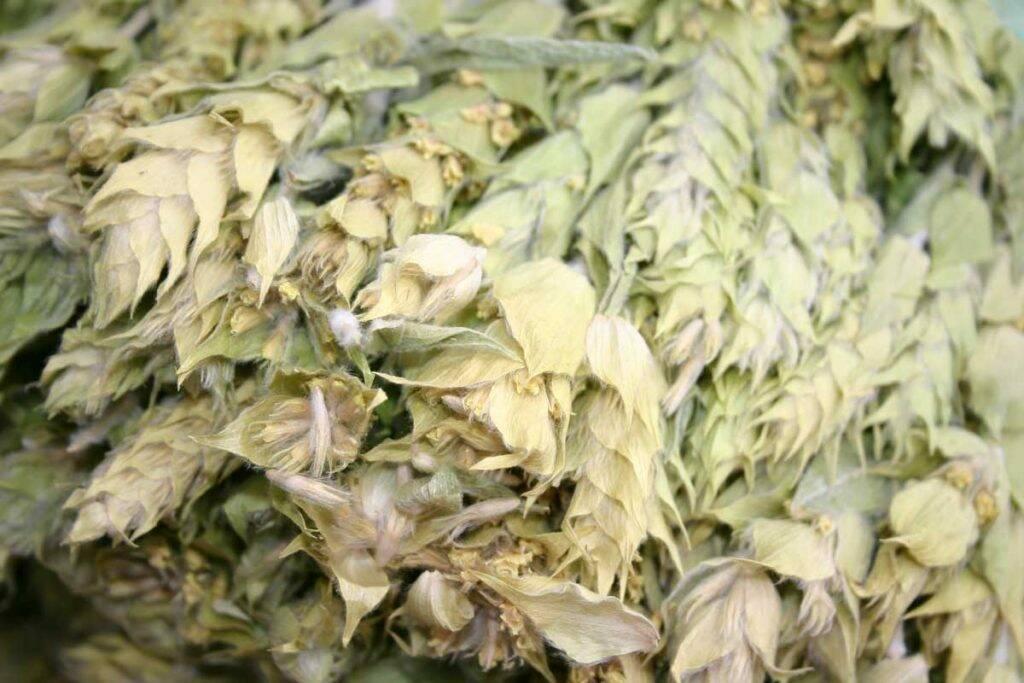 ceai-flori-de-munte