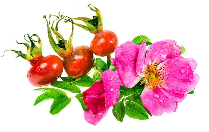 ceai-macese-flori-fructe