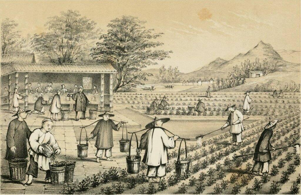ceaiuri-naturale-istorie-poza-1