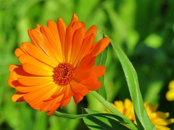 flori-de-galbenele