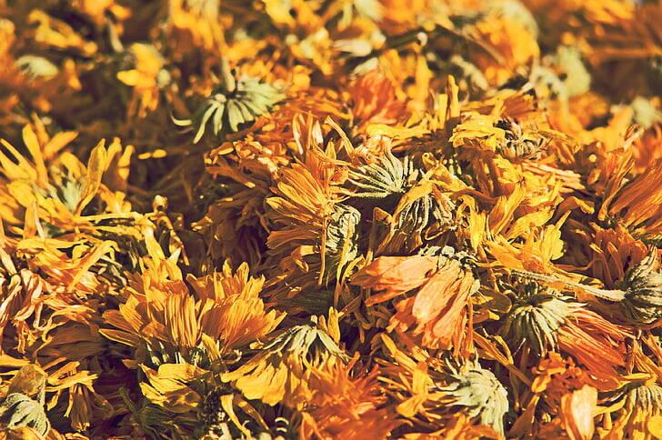 flori-uscate-papadie