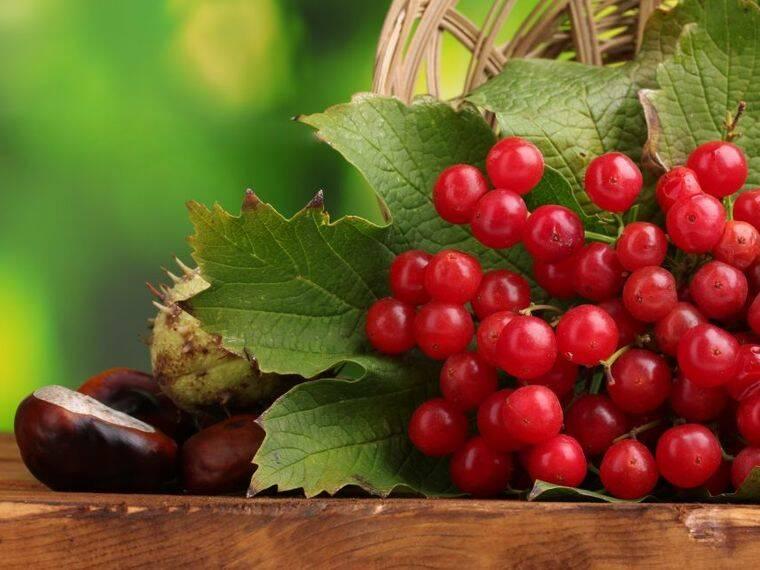 fructe-merisor