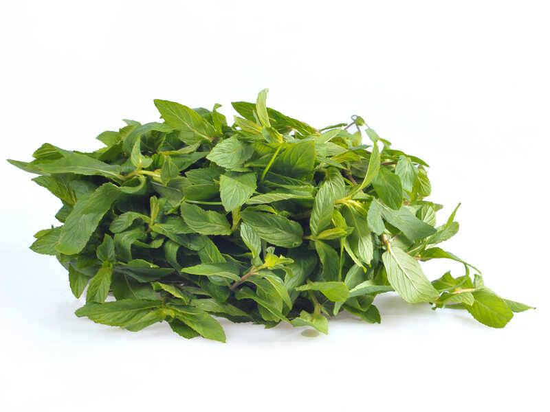 frunze-menta