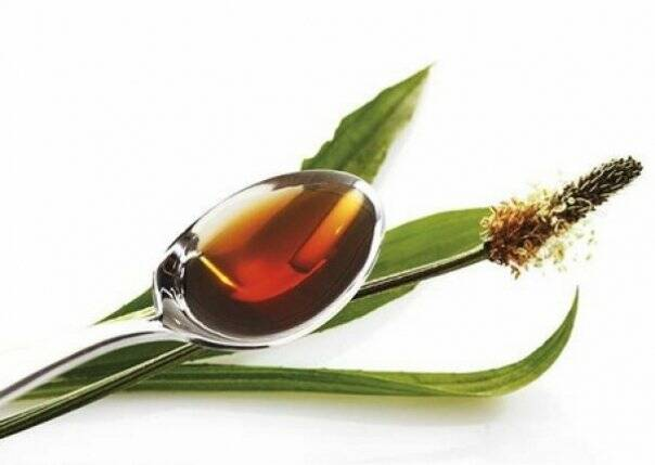 patlagina-ceai-planta